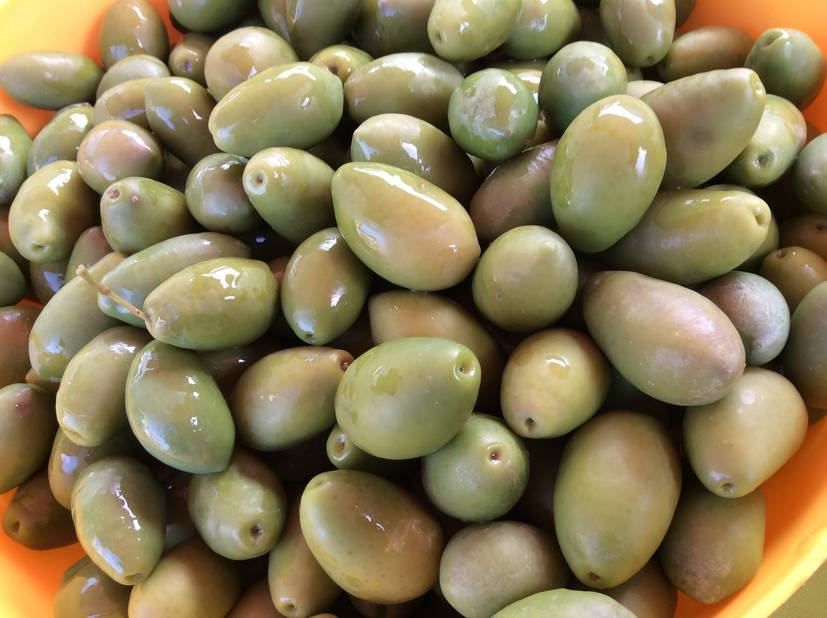 La Bella Cerignola: cette olive nous vient de la région des Pouilles en Italie, elle a une forme oblongue plutôt grande. Elle est croquante sous la dent. Elle est parfaite pour l'apéritif !