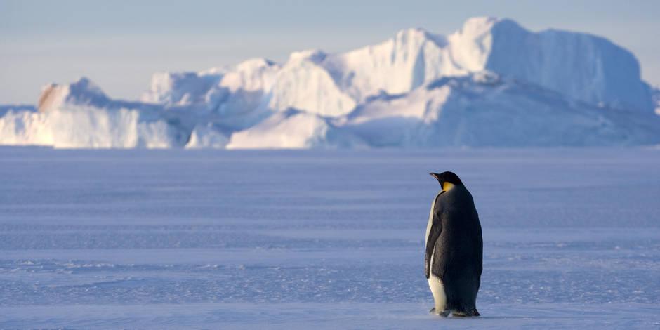 """""""La fonte des glaces"""" : le charcutier qui voulait sauver la planète - La Libre"""