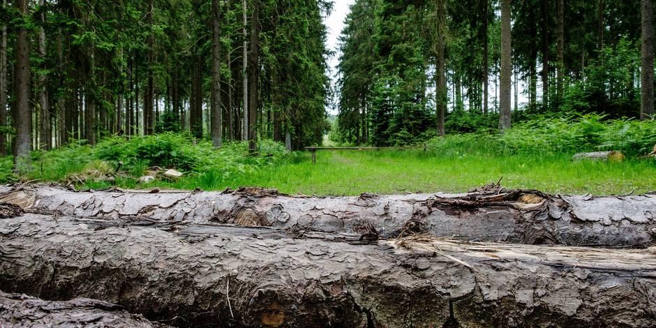 Bisons, zones sanctuaires, concerts, expos permanentes... : Voici le projet forestier d'Eric Domb que le gouvernement wa...