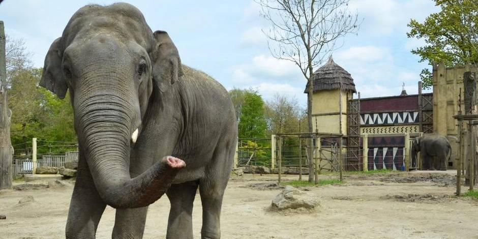 Le parc zoologique de Bellewaerde annonce la mort de l'éléphant Tunga — Belgique