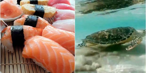 Quel est le rapport entre le ficus et le hérisson? Ou le sushi et la tortue marine? - La Libre