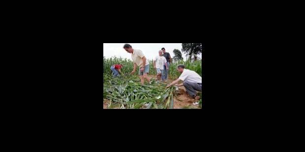 OGM: risque d'une peste verte? - La Libre