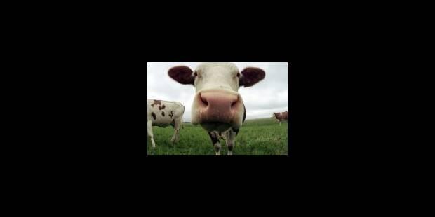Une histoire de vaches - La Libre