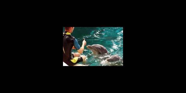 Le dauphin n'est pas thérapeute, mais...