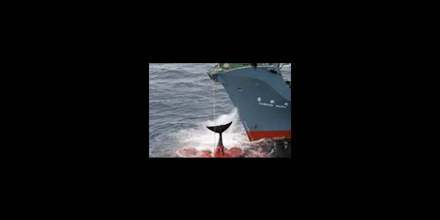 Un an de gagné pour les baleines - La Libre