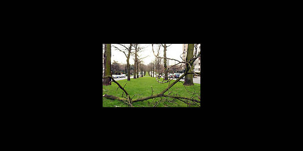 2000 nouveaux arbres le long des avenues - La Libre