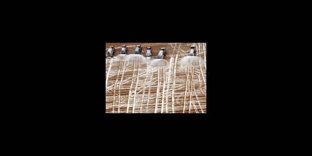 Le lait des agriculteurs a coulé à flots - La Libre