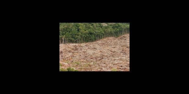Un géant de l'huile de palme s'engage contre la déforestation