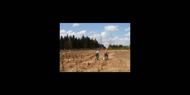 Un laboratoire forestier à ciel ouvert - La Libre