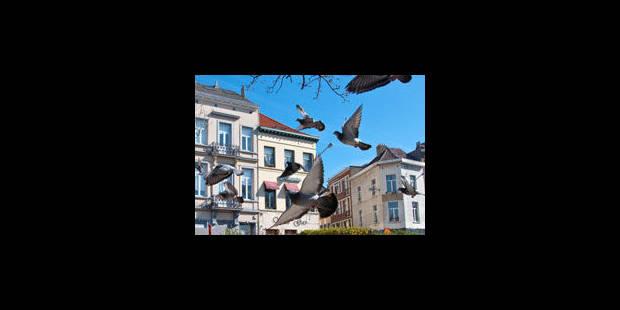 Quelle solution pour les pigeons ?