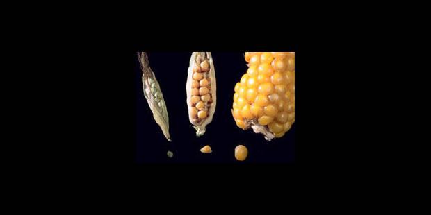 OGM ou pas, on te mangera ! - La Libre