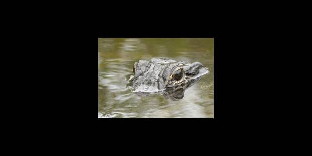 Obama assuré contre les morsures de crocodile pour sa visite australienne - La Libre