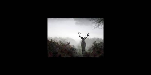 La chasse à l'approche et à l'affût des cerfs est prolongée - La Libre