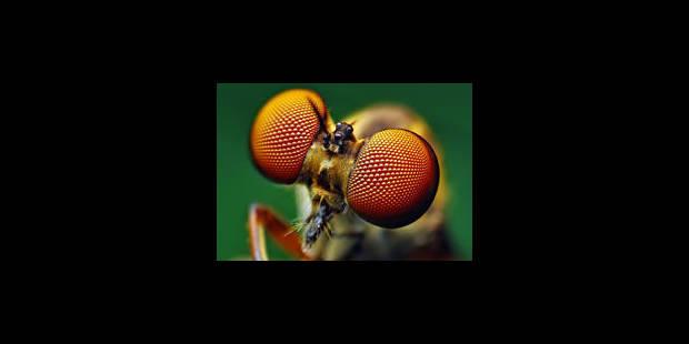 Les yeux de mouches inspirent les scientifiques - La Libre