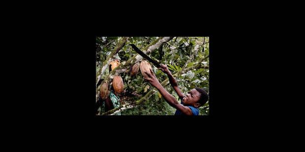 Les enfants victimes du cacao - La Libre