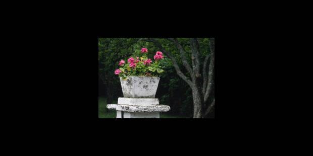 Poursuivi pour avoir lancé des fleurs... en pot - La Libre