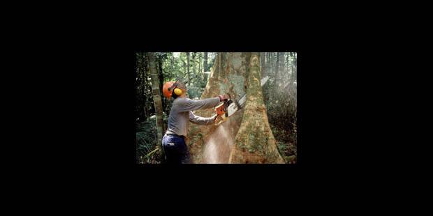 Feu vert à la déforestation