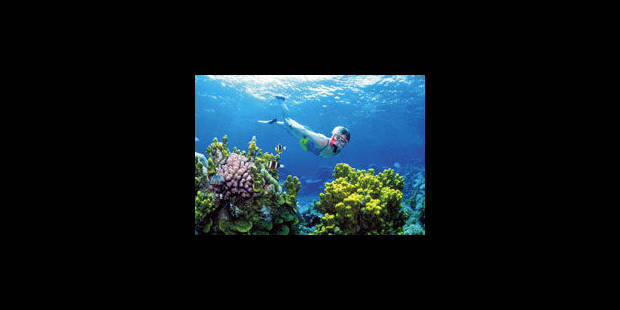 Les océans du monde sont malades - La Libre