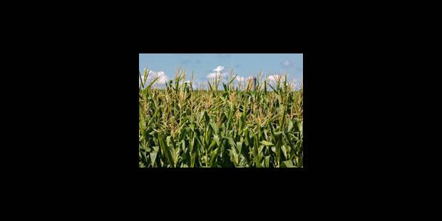 Les OGM sont-ils un danger pour notre santé ? - La Libre