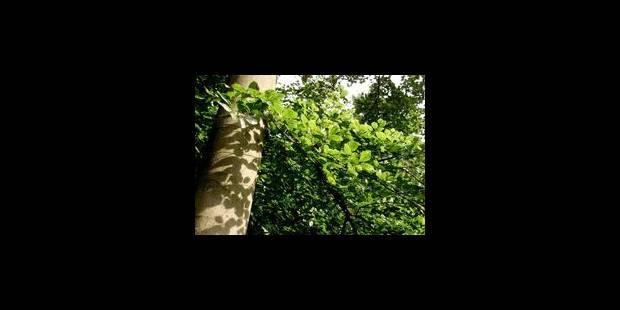 Des arbres contre des tracts francophones : voici le deal de la N-VA de Beersel - La Libre