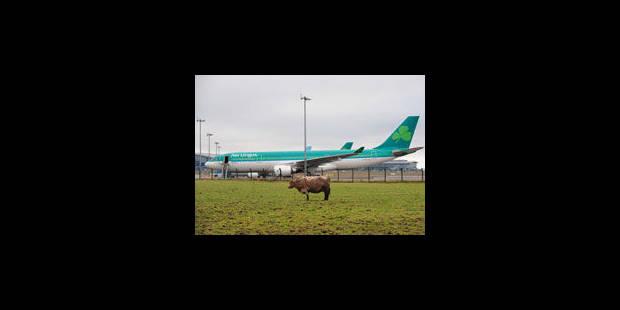 Aer Lingus bientôt basé à Brussels Airport? - La Libre