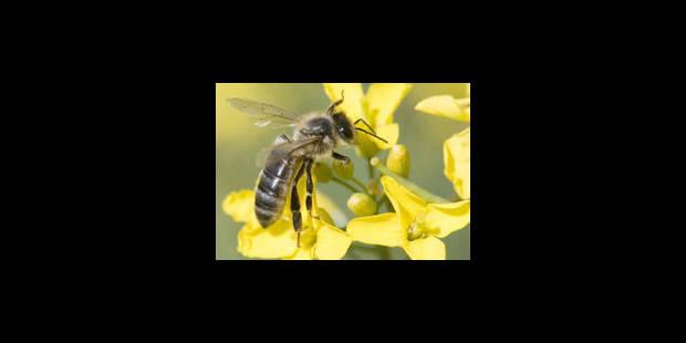"""""""Si les abeilles disparaissent, les jours de l'homme sont comptés"""""""