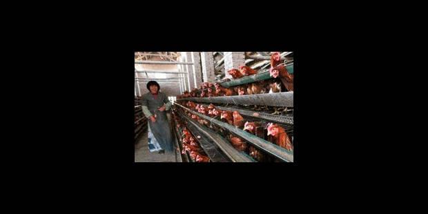 Grippe aviaire en Chine: aucun signe de transmission interhumaine - La Libre