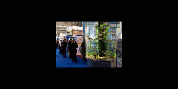 Seafood: Le Heysel prend la mer - La Libre