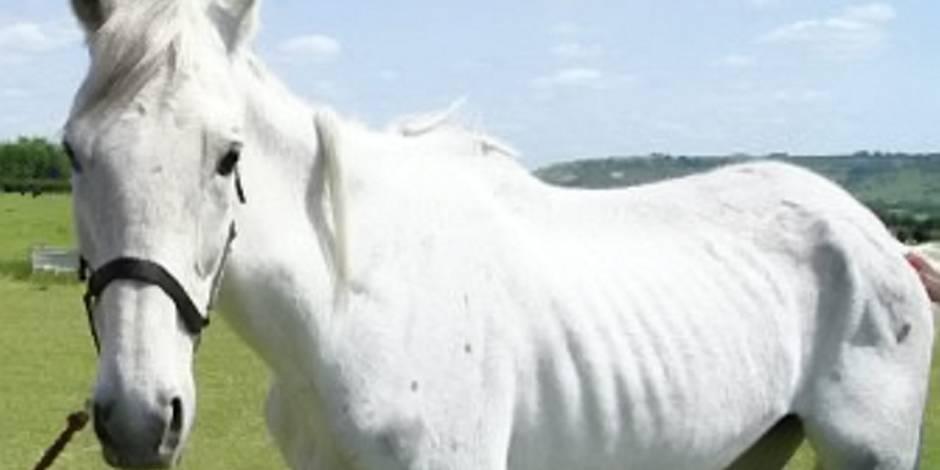 ADN: un cheval vieux de 700 000 bat tous les records