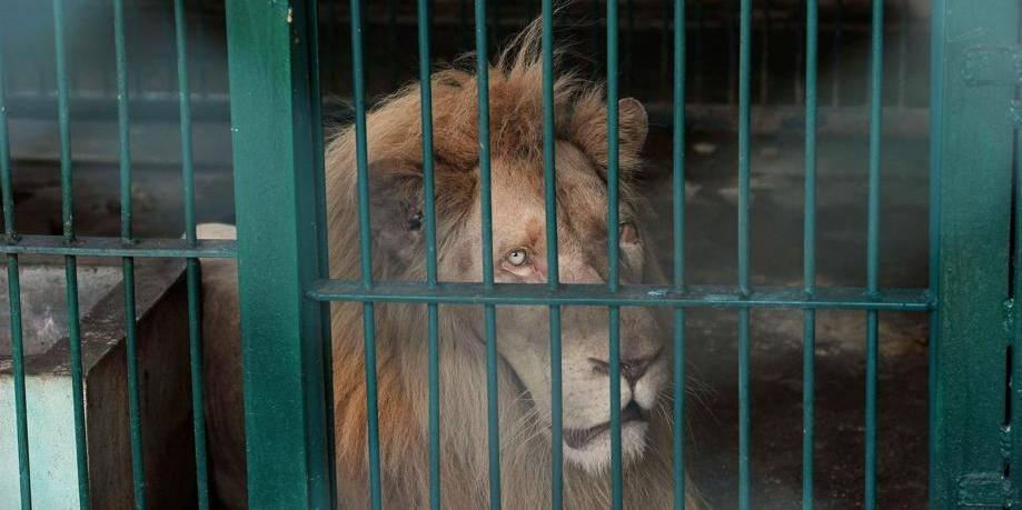 Des animaux sauvages dans les cirques: c'est terminé !
