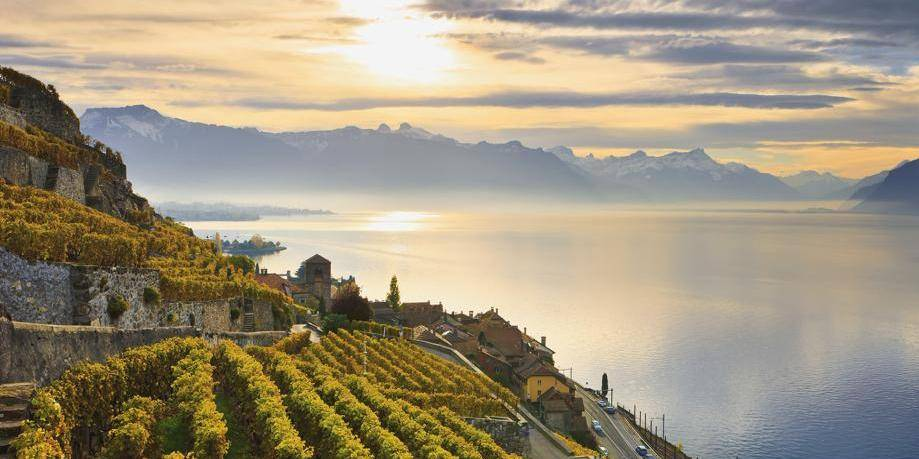 Vineyards; Saint-Saphorin, Lavaux, Switzerland
