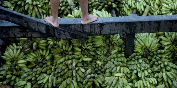 De la banane au smartphone - La Libre