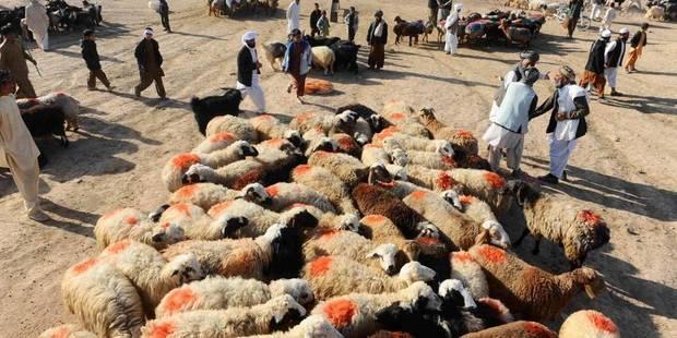 Fête de l'Aïd : remplaçons le sacrifice par des dons - La Libre