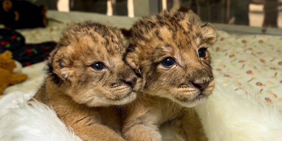 Est-il éthique de garder des animaux sauvages en captivité?
