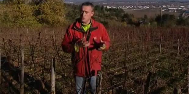 De la prison pour un viticulteur qui refuse d'utiliser un insecticide?