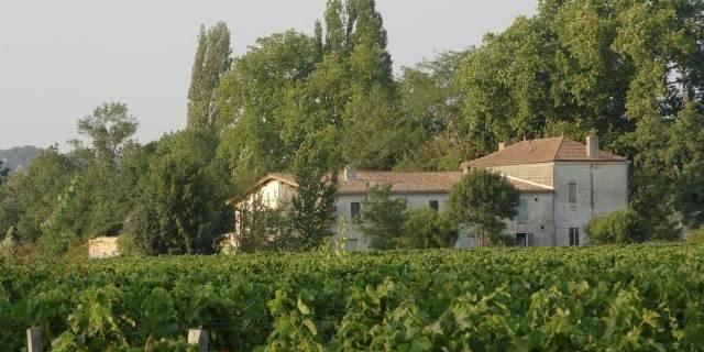 En visite au vignoble : de la finance au vin à Jabastas