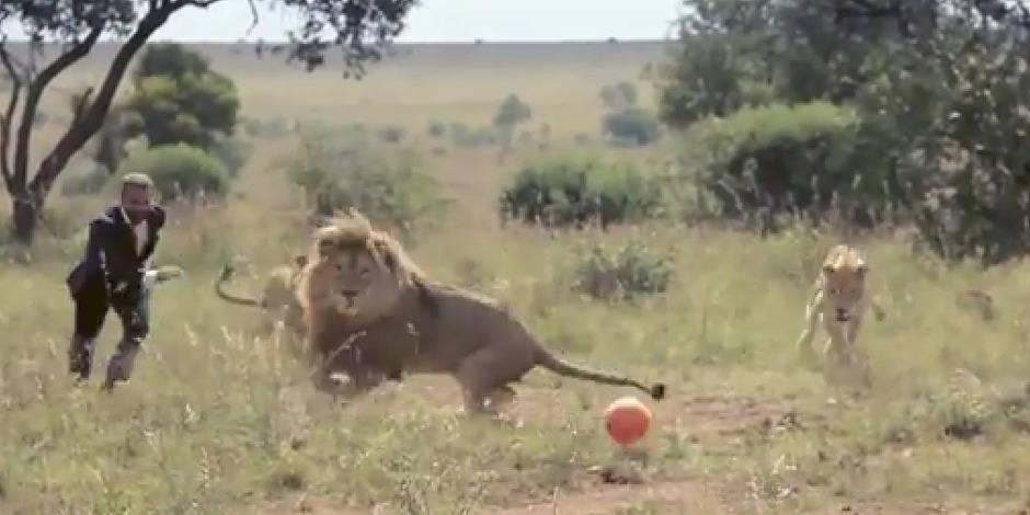 Il joue au foot avec des lions