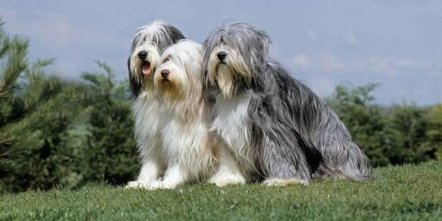 Japon: une maison de soins pour pépés-chiens va ouvrir