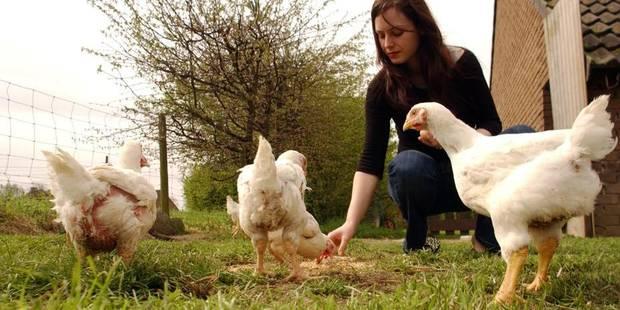 Grippe aviaire: la Belgique ordonne le confinement des volailles d'élevage - La Libre