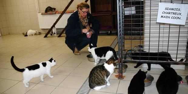 Le refuge d'Animaux en péril est fermé à Braine-l'Alleud - La Libre