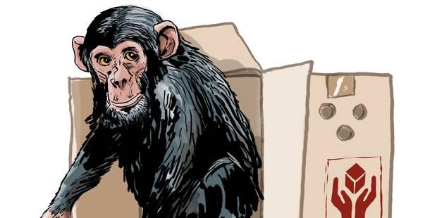 Les animaux auront-ils bientôt des droits fondamentaux? - La Libre