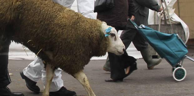 Fête du sacrifice: Ottignies retire ses conteneurs destinés aux dépouilles de moutons sacrifiés - La Libre