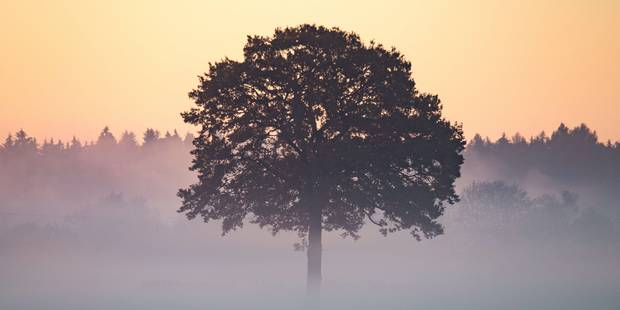 Le 1er novembre le plus chaud jamais enregistré - La Libre
