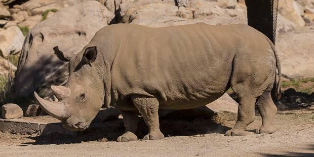 Mort d'un des quatre derniers rhinocéros blancs du Nord - La Libre
