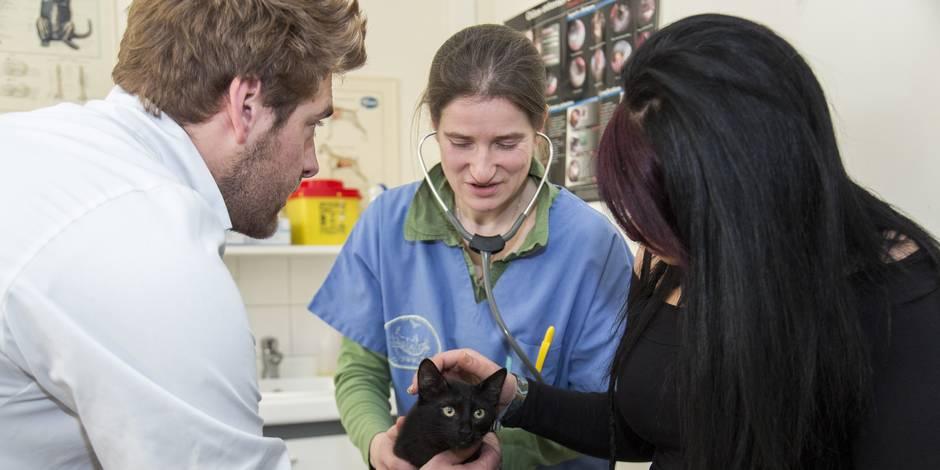 Seraing: des vétérinaires pour tous - La Libre