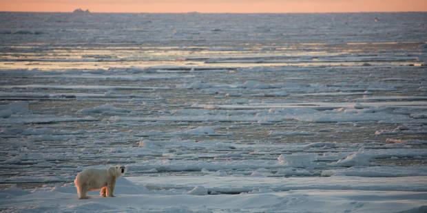 Record de température en février dans le monde - La Libre