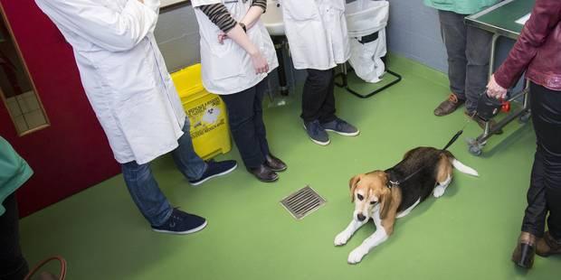 Un concours pour trier les étudiants vétérinaires? - La Libre