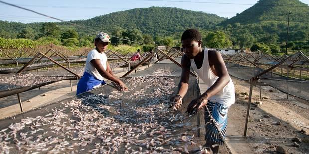 Le Zimbabwe vend ses animaux sauvages pour les sauver de la sécheresse - La Libre