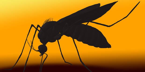 Virus Zika: quelles sont les zones potentiellement à risque en Europe ? - La Libre