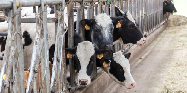 Une aide européenne à la crise laitière qui déçoit - La Libre